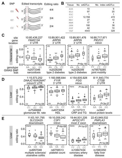 RNA editing quantitative trait loci.