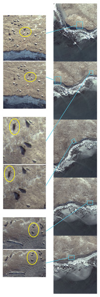 Assessments of consecutive images during initial UAV over-flight at Hay Island, Nova Scotia, Canada.