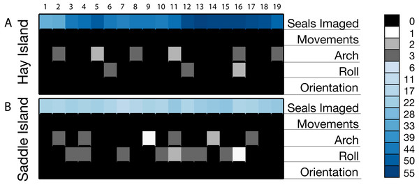 Cell plot of observed gray seals and behavioral responses in sequential images from overflights by senseFly eBee UAS at two gray seal colonies in NS, Canada.
