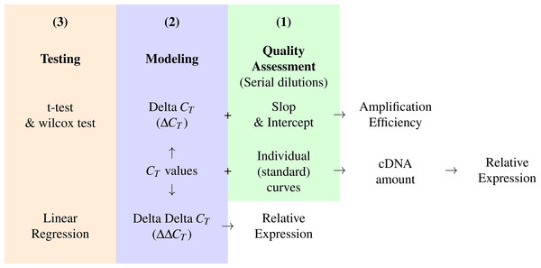 A conceptual workflow of the analysis of RT-qPCR data.