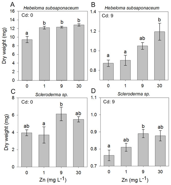 Effect of Zn addition on ectomycorrhizal cultures exposed to Cd.