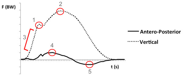 Representative ground reaction forces (vertical and antero-posterior components) from the stance phase of one running stride. Force was normalized to body weight (BW).