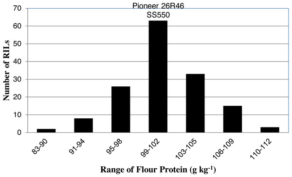 Distribution of average flour protein values for wheat recombinant inbred lines and their parents.