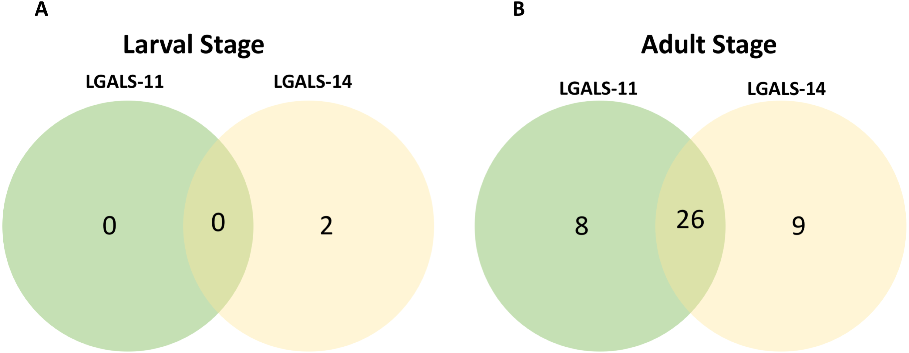 Proteomic identification of galectin-11 and 14 ligands from