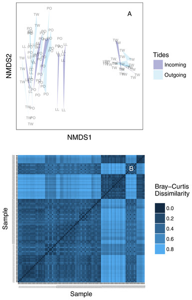 (A) Ordination plot (non-metric multidimensional scaling; NMDS) plot of Bray–Curtis dissimilarities among sequenced replicates, by sampling bottle (polygon) and tide (polygon color). Polygons connect communities sequenced from replicate PCR reactions of the same sampled bottle of water. (B) The same data shown as a heatmap, ordered by site identity. Only the Twanoh samples (upper right) stand out as having substantial heterogeneity, reflecting the two different communities present during different sampling events at that site.