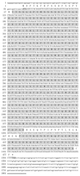 Nucleotide sequence and deduced amino acid sequences of ZmCAT catalase.