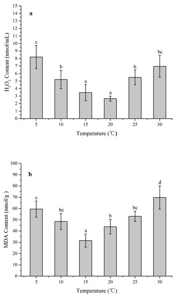 The effects of temperature stress on H2O2 and MDA contents in Z. marina during a 96 h experiment.