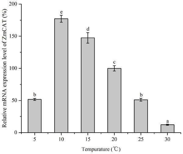 The effects of temperature stress on the relative mRNA expression levels of ZmCAT.