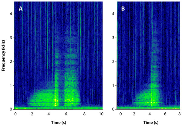 Spectrograms of male roar vocalizations.