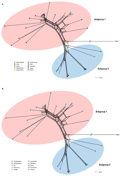 Phylogenetic networks of the CP gene from 36 OrMV isolates from different countries (A) and hosts (B).