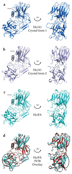 Crystal structures of HC domains.