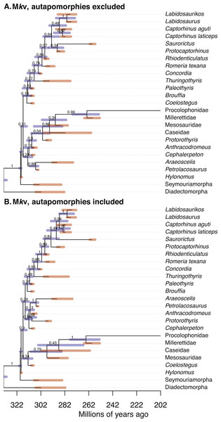 Comparison of the tip-dated phylogenies of early eureptiles inferred when excluding (A) or including (B) autapomorphies, under Mkv ascertainment bias correction.