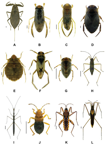 Representative images of analyzed aquatic bug species.