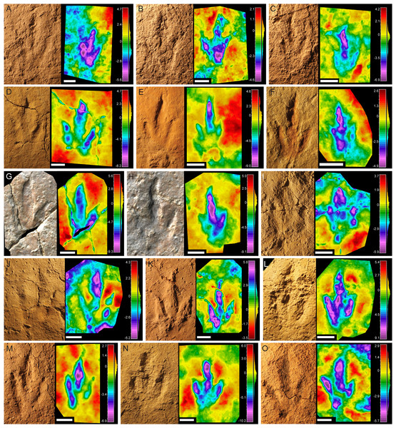 Pictures and false-color depth maps of the tracks with a high preservation grade that belong to the gracile morphotype.