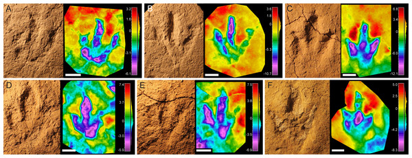 Pictures and false-color depth maps of the tracks with a high preservation grade that belong to the robust morphotype.