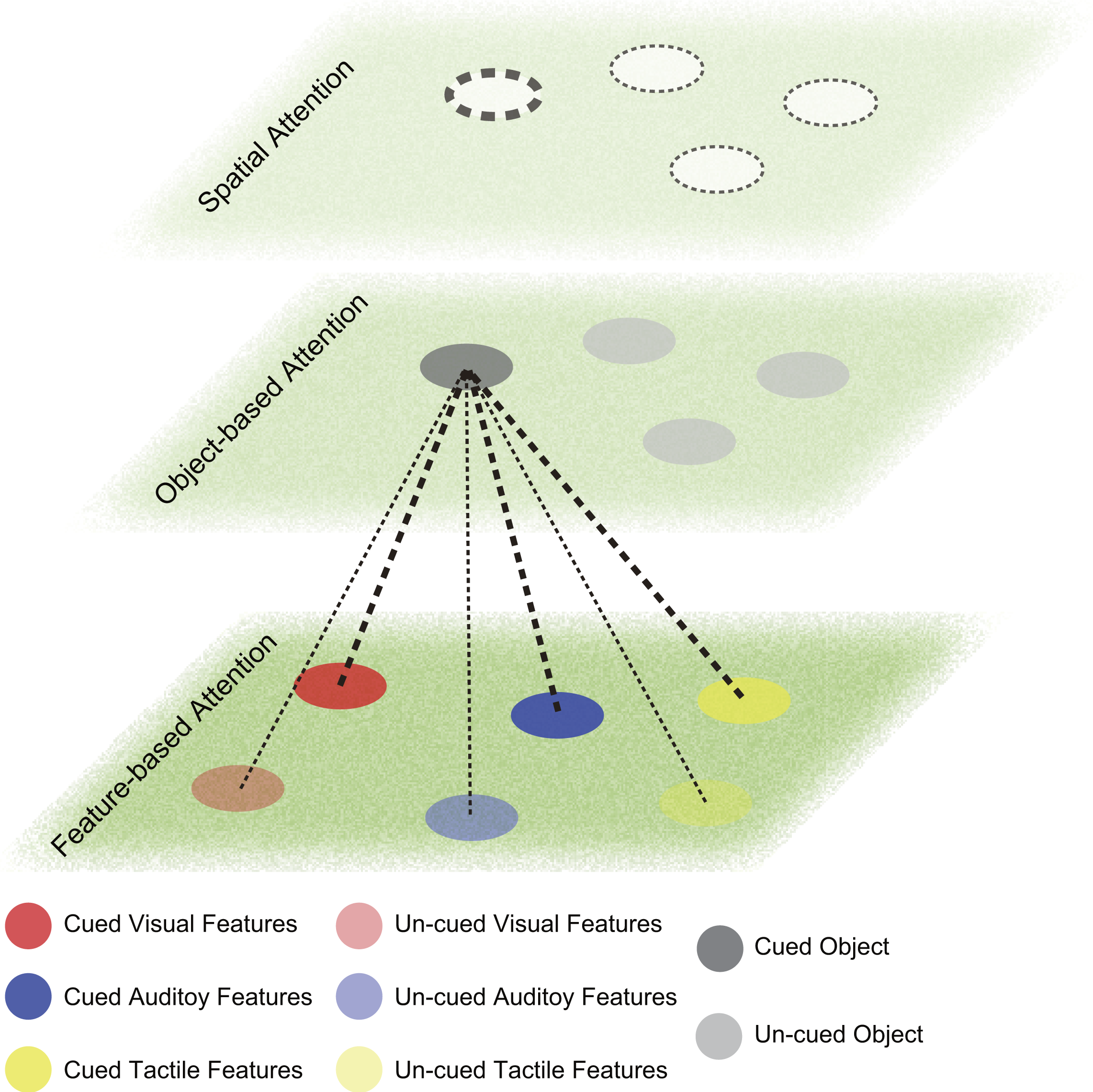 What Is Working Memory >> Selective Attention On Representations In Working Memory Cognitive