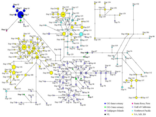 Median-joining network of common bottlenose dolphin mtDNA CR.