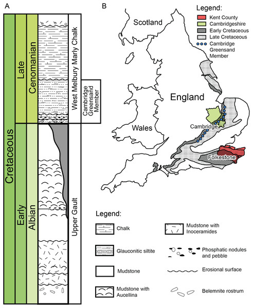 (A) Schematic log modified from Unwin (2001) containing the lithology and the stratigraphic position of the Cambridge Greensand Member. (B) Schematic map positioning the Cretaceous deposits of England.