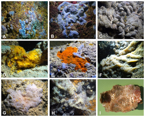Sponges from the Budova Cave.