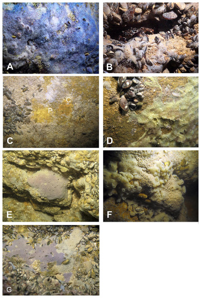 Sponges from the Temnata dupka Cave.