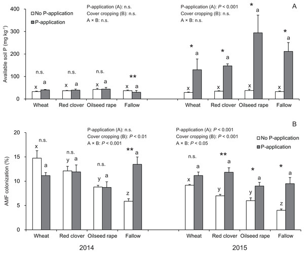 Impact of cover cropping and phosphorus (P) regime on the available soil P and root colonization of arbuscular mycorrhizal fungi (AMF) in the soybean at full bloom stage (R2) in 2014 and 2015.
