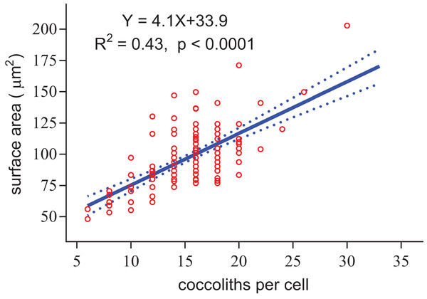 Positive linear relationship between coccoliths per cell and coccosphere surface area.