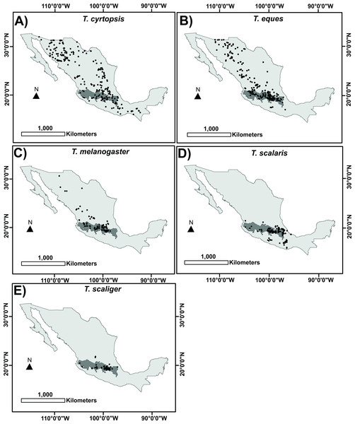 Occurrence records used to build the distribution model for each Thamnophis species, showing the Trans-Mexican Volcanic Belt (TMVB) in dark gray.