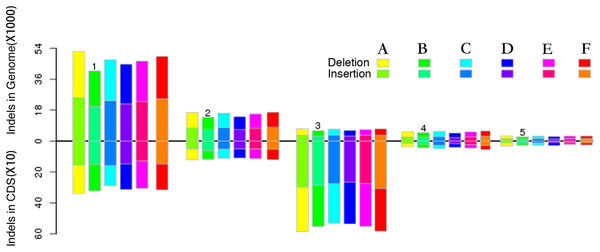 Different InDel size distributions and frameshift mutation s between the whole genome and CDS region.