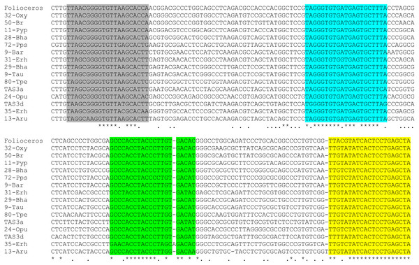 Multiple sequence alignment of selected available nucleotide sequences of class III TAS3-like loci from Bryopsida mosses along with TAS3 locus of Folioceros fuciformis.