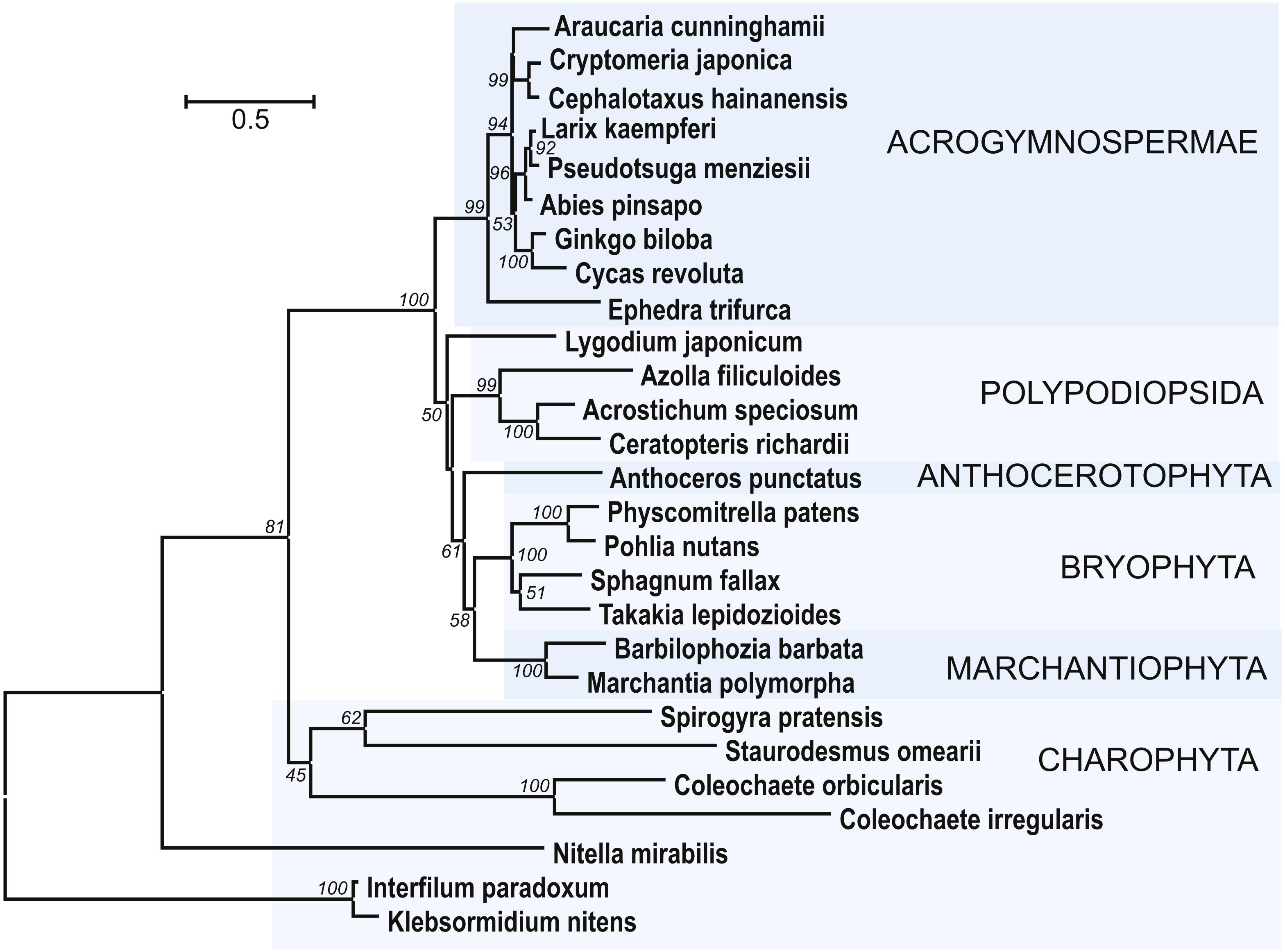Lygodium Flexuosum Pdf