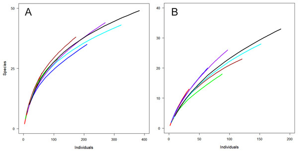 Observed species richness for individual-based rarefaction curves for Huapai (A) and Oratia (B) for different sampling periods.