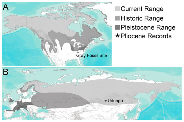 Distribution of Gulo through time in (A) North America and (B) Eurasia.