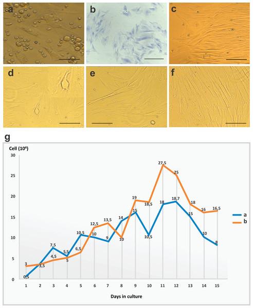 CFU-F assay, bone marrow mesenchymal stem cell (BM-MSC) in culture and growth curve of stem cells.