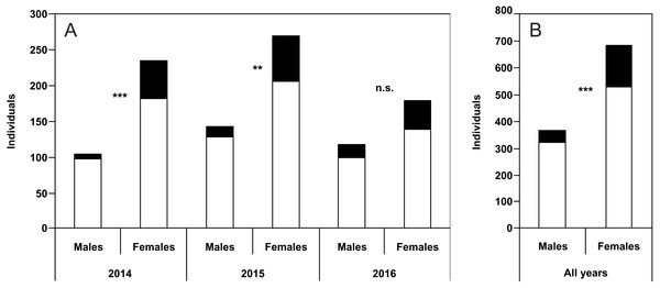 Numbers of males and females of P. oblongopunctatus in the years of study and all years together with the share of individuals with unusual puncture patterns indicated in black.
