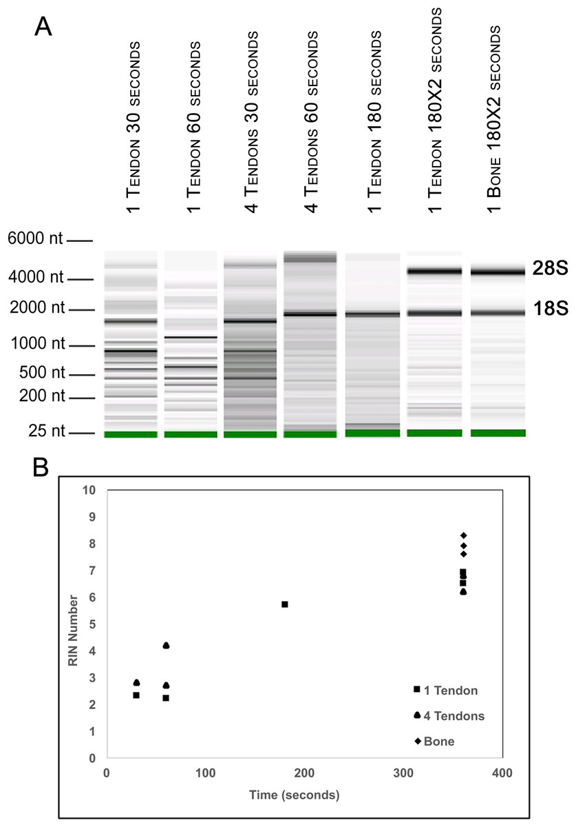 A robust method for RNA extraction and purification from a