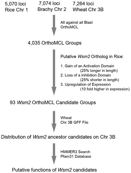 A diagram showing the analysis procedures and summary of results in identifying Wsm2 ancestor candidates.