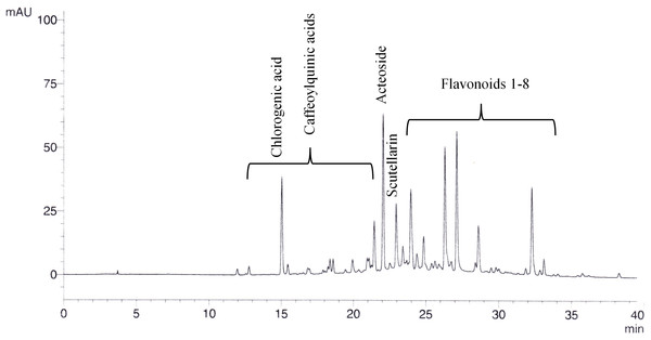Exemplary chromatogram of 20% ethanolic S. scardica extract.