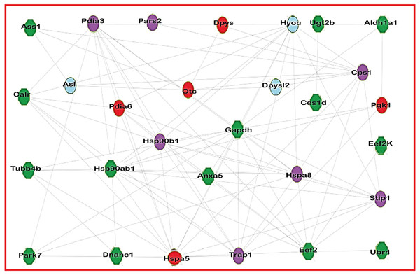 Network of acetylated proteins in group treated with Diacetyl.