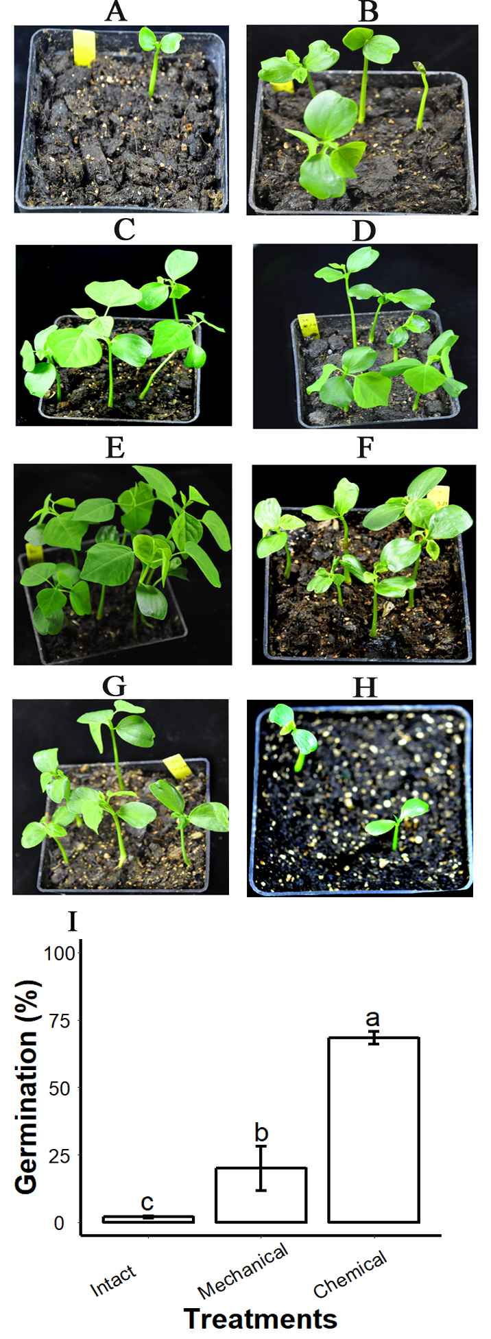 Proanthocyanidins In Seed Coat Tegmen And Endospermic Cap Inhibit