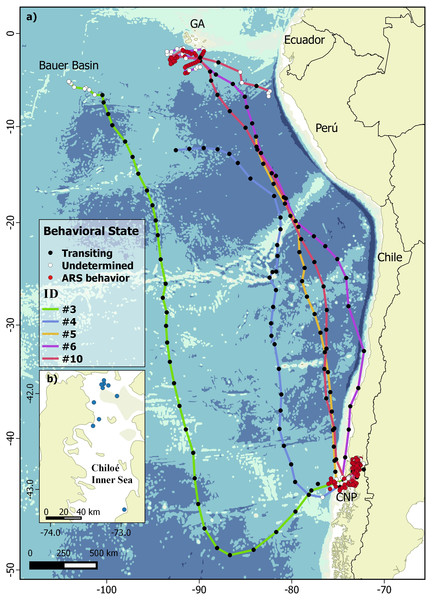 Bayesian switching first-difference correlated random walk (DCRWS) model-derived tracks of five wide-ranging blue whales tagged in Chilean Northern Patagonia.