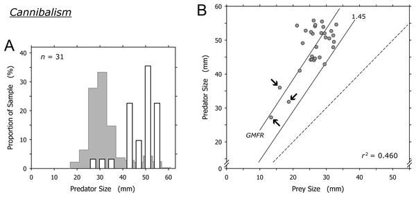 Relationship of predator and prey shell lengths in cannibalistic interactions in Agaronia propatula.