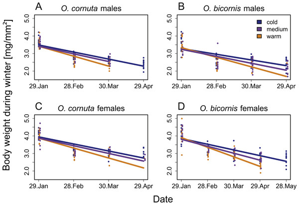 Influence of date on the body weight during overwintering of (A) O. cornuta males, (B) O. bicornis males, (C) O. cornuta females and (D) O. bicornis females.