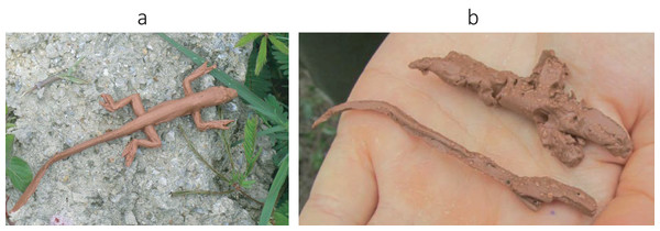 Clay model of a brown anole used for estimating predation pressure.
