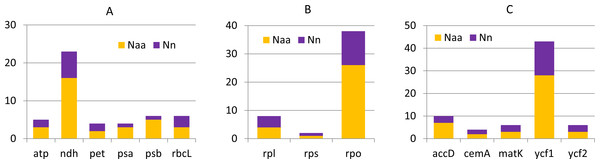 Nucleotide and amino acid substitutions in cp genome of C. apetalus when compared with C. quitensis plastid genome.