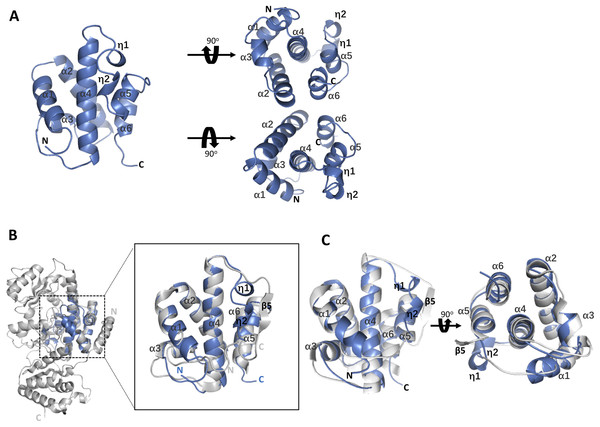 The architecture of the core motif from the AT domain and structural comparison with the AT domain (PDB code 3TZW and 3TZZ).
