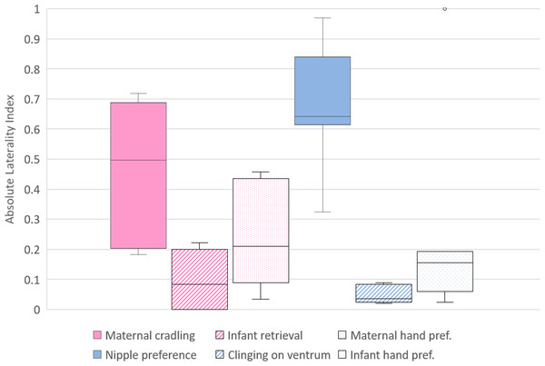 Strength of lateral biases in the behaviour of mother and infant Barbary macaques.