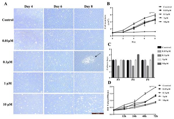 VB-1 facilitates the proliferation of human DPCs.