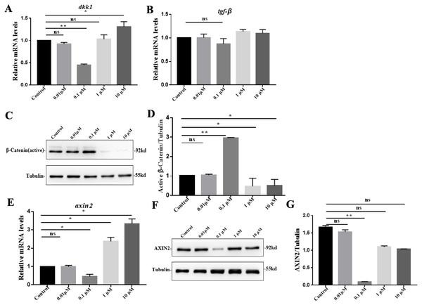VB-1 promotes Wnt/β-catenin signaling in human DPCs.