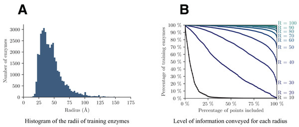 Analysis of the distribution of the radii among training enzymes (A) and corresponding level of information conveyed (B).