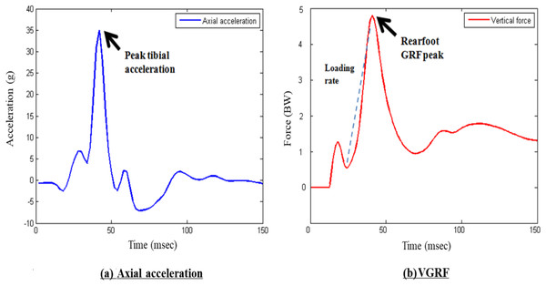 Sample curves of (A) tibial acceleration and (B) ground reaction force.